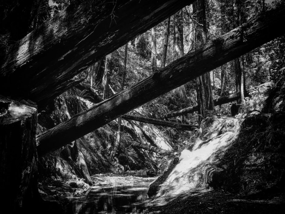 Steep Ravine, Dorothea Lange, photography, Marin, Stinson Beach, trail, California State Parks, nature, redwoods, black and white, iphone photography, adventure, bay area, wilderness, Jamie Lyons