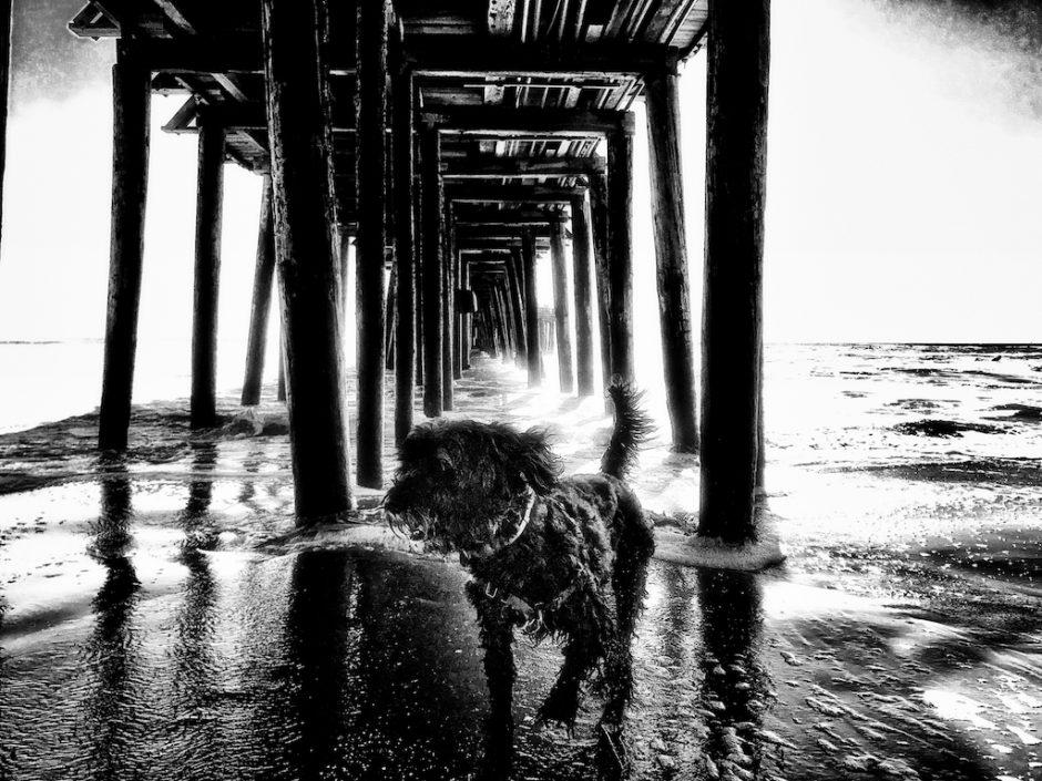 Capitola, Warf, Beach, ocean, boardwalk, portuguese water dog, Sharka